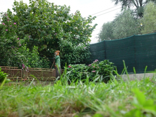 Garden Clearance Trowbridge